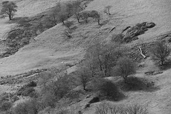 Hillside (Tony Tooth) Tags: nikon d600 sigma 50500mm hillside sheepfarm countryside landscape bw blackandwhite monochrome wincle cheshire england