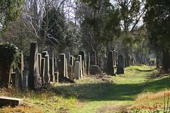 IMG_8262 (Pfluegl) Tags: wien vienna zentralfriedhof graveyard europe eu europa österreich austria chpfluegl chpflügl christian pflügl pfluegl spring frühling simmering