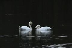 IMG_5083 (monika.carrie) Tags: monikacarrie wildlife scotland fyvie