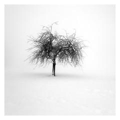 (ArztG.|Photo) Tags: bnwphotography fineartphotography minimalist minimalism minimal square snow silence longexposurephotography love peace photography austria atmosphere arztg|photo loveoftrees