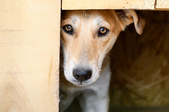 Dog (petr.petrov) Tags: dog pet animal popular tags homeless shelter eyes sad creature sadness russia care