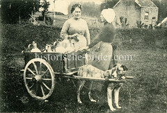 X990016 arbeitshund belgien (stadt + land) Tags: hunde hund bilder fotos arbeitshund historisch früher aufgabe transport alte fotografien