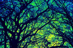 Spark The Synapses (HiJinKs Media...) Tags: colours colors colori colores sky surreal abstract angles lines trees branches brain synapses mind think nature outside geometry life light dark daydream