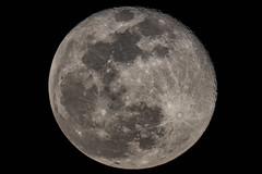 La luna (Cristiano Pelagracci) Tags: moon luna astro astronomy astrophotography celestron c9 telescope fullmoon moonrise nature satellite italy