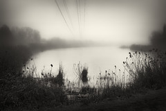 bulrush and wires (Pomo photos) Tags: sepia brown lake river water reflection mist misty surreal noir cable wire tree trees wood waves blackandwhite blackwhite bw monochrome mono mood morning dream creative bulrush bush horizon landscape fujifilm fujifilmx100s x100s