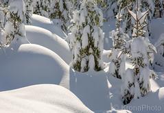 Early spring forest..., Sande, Norway (KronaPhoto) Tags: 2019 natur vår hdr winter spring vinter snø snowscape snow landscape forest skog visitnorway nature norway bestofnorway shapes whiteworld white tree tre spruce lines ilovenature sunnyday sunny