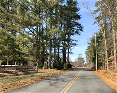 Country Road (Timothy Valentine) Tags: clichésaturday trees road 0319 large 2019 springtime fence eastbridgewater massachusetts unitedstatesofamerica us