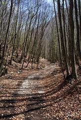 All'inizio di aprile, sull'Appennino, nel bosco ancora spoglio (giorgiorodano46) Tags: aprile2016 april 2016 giorgiorodano appennino bosco velino capoditeve abruzzo italy
