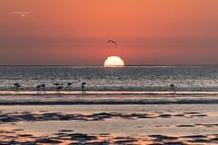 Namibia Skeleton Coast (FrancescaBullet) Tags: namibia natura nature animals animali animal seascape landscape ocean oceano sunset sun sole tramonto colors colori lights birds uccelli africa safari