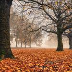 2nd -  Print League 2 - Colour, WGC - Autumn on the Campus by Martin Parratt