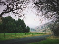 """""""Follow The Fog"""" (bradhodges09) Tags: trees green mysterious foggyday foggy fog pavement california rollinghills countryside countryroads roads"""