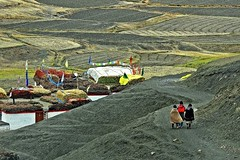 Walking the life... (Lopamudra !) Tags: lopamudra lopamudrabarman lopa landscape langza langja langjha spiti spitivalley valley vale culture cultivation agriculture life human himalaya himalayas highaltitude highland himachal hp himachalpradesh india path village civilisation civilization hamlet beauty beautiful picturesque