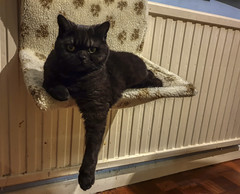 Chilled (neilalderney123) Tags: caturday cat feline olympus