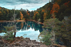 Se viene el Otoño!! - Parq. Nac. Conguillio (Norpatagonia Chile) (Noelegroj (Very busy/Celebrating 11 Millions+views) Tags: chile araucania transparency downbellow norpatagonia melipeuco congullio nationalpark parquenacional laguna lagunaarcoiris reflejos reflections troncos baretrunks otoño autumn forest woods bosque colorfull colorido paisaje landscape nature naturaleza multicolor policromatico arboles trees grass pastos yellow orange red amarillo naranja rojo pink magenta purpura purple otono fall newseason unesco lagoon