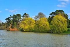 Hever Castle (gary8345) Tags: iphone uk unitedkingdom england garden snapseed 2019 britain gardens greatbritain