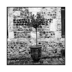 pot • honfleur, normandy • 2018 (lem's) Tags: pot street rue honfleur normandy normandie rolleiflex t