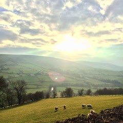 Shine bright (PMac55) Tags: spring sheep sperrinmountains northernireland tyrone fields sky clouds ireland peaceful mountains hills green sun