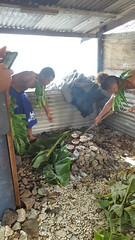 Peter's son & nephew preparing our breakfast in their umu