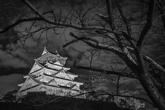 Osaka Castle Japan (spintheday) Tags: oosakacastle japan light blackwhite bw tree night cloud windy cold vacation holiday travel