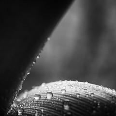 Rainy day therapy II (Jan.Timmons) Tags: pacificnorthwest ©jantimmons2019 friendshipbetweennations freedomfromoppression apologiesforourgovernment noborders fronds waterdrops nature