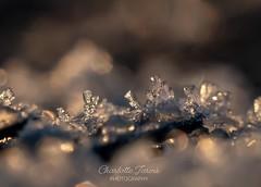 2mm tall ice crystals - hand held (charlottejarvis@live.co.uk) Tags: london england crystal macro ice uk