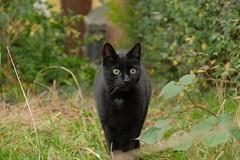 DSCF0048 (Hansjepansjekevertje_) Tags: katten kat cats cat siep