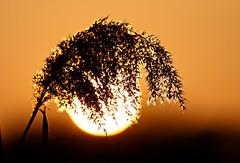 Sunset lamp (HorvathZsolt73) Tags: sunset naplemente lights sundown lake naplás hangulat budapest februar winter perspective
