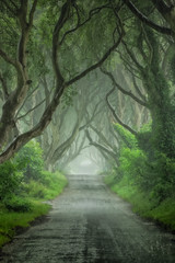 thedarkhedges trees avenue northernireland gameofthrones... (Photo: snapdragginphoto on Flickr)