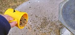 Feeding The Birds (Sue90ca Spring Has Sprung...No Grass, No Flowers) Tags: canon 6d backyard