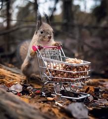 SQUIRREL, by Ossi Saarinen (SOVS43) Tags: squirrel byossisaarinen