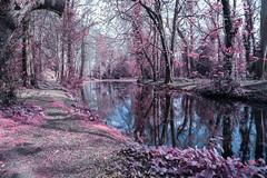 Bushy park fantasy~HSS (Wendy:) Tags: hss infrared bushypark ir photoshop filter 730nm hitechformattprostopndir6