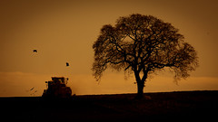 The Spring Plough (PeskyMesky) Tags: aberdeen aberdeenshire potterton tree spring landscape sunrise sunset silhouette red sky scotland canon canon5d eos