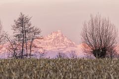 Pianura Piemontese e Re di Pietra (claudio g) Tags: mondovì cuneo piemonte monviso redipietra pianura padana campo grano alba sunrise sun