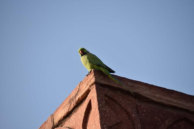 A curious onlooker, Sikri