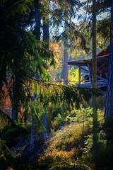 October cottage (Klas-Herman Lundgren) Tags: dalarna sweden gimmen autumn höst oktober forest trees skog green orange red travel october sifferbo se