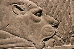 Lioness (calmeilles) Tags: london england unitedkingdom ashurbanipal britishmuseum assyria ancienthistory archaeology middleeast nineveh