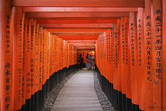Fushimi Inari Taisha, Senbon Torii  - Kyoto (Japan) (Andrea Moscato) Tags: andreamoscato giappone japan asia japanese 日本 nihon nippon asian light luce shadow ombre prefecture attraction ombra site national natural view vivid vista history historic ancient wood architecture art street strada road red traditional pedestrian tourist shrine ward gate torii walk path perspective tunnel galleria trail sun day structure columns orange sign writing people black