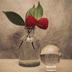 Camellias with a Crystal Glass Orb (N.the.Kudzu) Tags: tabletop stilllife glass bottle vase flowers camellia red crystal orb canoneosm lensbabytrio28 lightroom photoscape