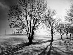 Wide and snow (black.parrot_photo) Tags: erzgebirge schnee snow landscape tree blackandwhite