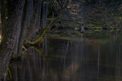 IMG_6594 (karlsson_mari) Tags: canon 1200d vatten water spegling småland höglandet