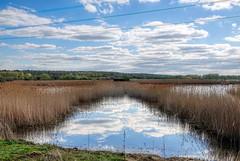In the reeds at Old Moor (sumowesley) Tags: oldmoor