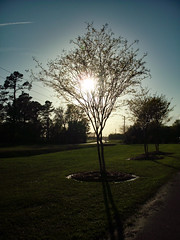 Setting Sun. (dccradio) Tags: lumberton nc northcarolina robesoncounty outdoor outdoors outside nature natural park citypark raymondbpenningtonathleticcomplex penningtonathleticcomplex northeastpark april weekend saturday saturdaynight saturdayevening evening goodevening spring springtime hp hewlettpackard hpdsccb350 tree trees treebranch branch branches treebranches treelimb treelimbs sky eveningsky