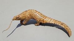 pangolim (miguel kibagami) Tags: art artist kaixiangzhong xiang zhong papercraft cardboard plastic arte china chinese origami