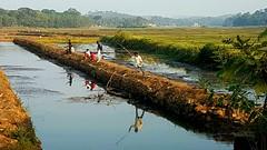 Evening pastime ! (R.Sreeram) Tags: mobilephotography pastime kerala fishing canal evening village kottayam paddyfield