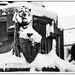 White lions (winter in Freiberg)