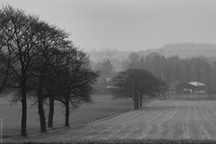 """het Elzenhout"" (B.Graulus) Tags: landscape landschap vlaamsbrabant bekkevoort belgium belgië belgique blackandwhite monochrome trees flanders farm fields photography canon"