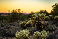Scottsdale, Arizona 12-30-18 (benakersphoto) Tags: sony sonyalpha mirrorless a6000 landscape plant cactus desert arizona arizonadesert scottsdale scottsdaleaz southwest america usa landscapephotography landschaft naturephotography natur 50mm flickr colors exposure outside nature naturaleza colours sun sunrise sky dawn day