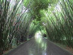 Wangjianglou Park (D-Stanley) Tags: wangjiangloupark bamboo wangjianglou jinjiangriver chengdu sichuan china