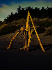 Standing Driftwood (Steve Taylor (Photography)) Tags: driftwood art digitalart sculpture brown black blue wood newzealand nz southisland canterbury christchurch northnewbrighton trees beach dunes seaside