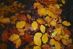 autumn (Jos Mecklenfeld) Tags: autumn herbst herfst nature natur natuur forest wald bos westerwolde niederlande nederland jipsingboertange groningen netherlands nl sonya6000 sonyilce6000 sel30m35